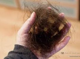 Hỏi: Ngoài bạc tóc, tôi còn bị rụng tóc và rất nhiều gàu, tôi dùng Bonihair thì có những tác dụng nào?