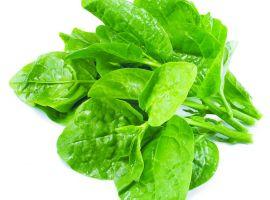 Mẹo hay giảm tiểu buốt hiệu quả với rau mùng tơi